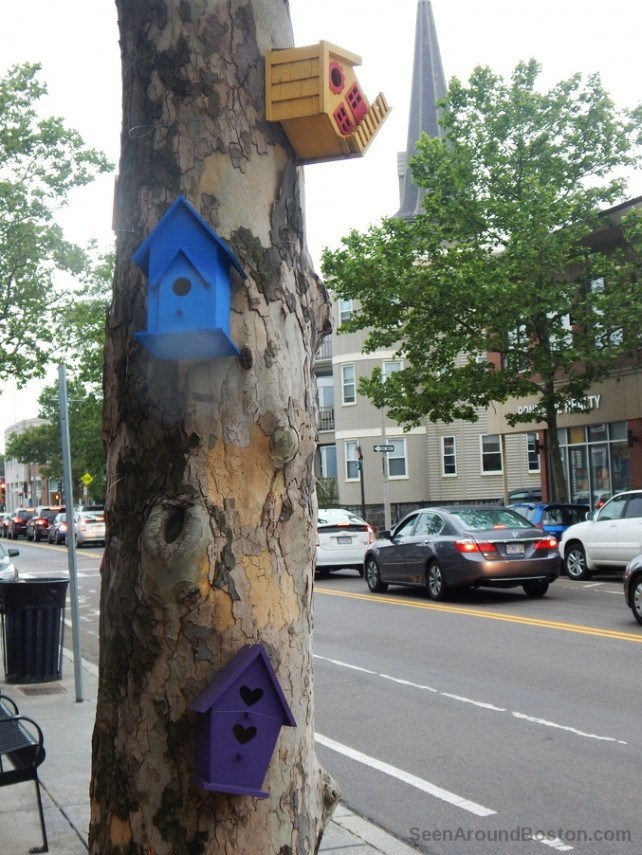 bird houses art installation, jamaica plain