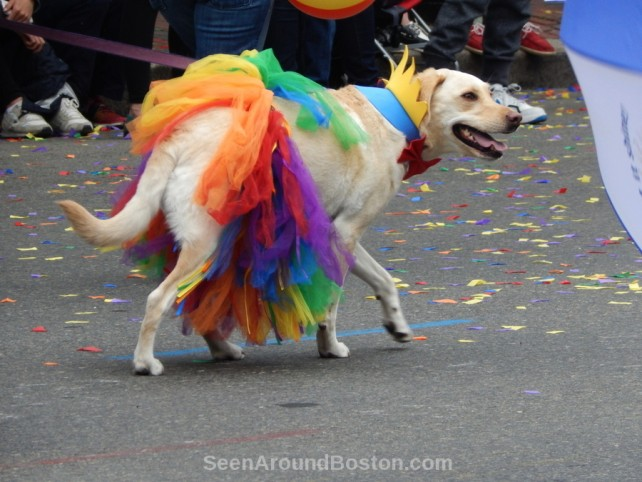 rainbow skirt, dogs of boston pride parade 2016