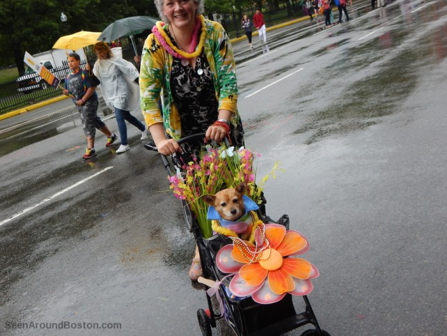 dog in a stroller, 2016 boston pride parade