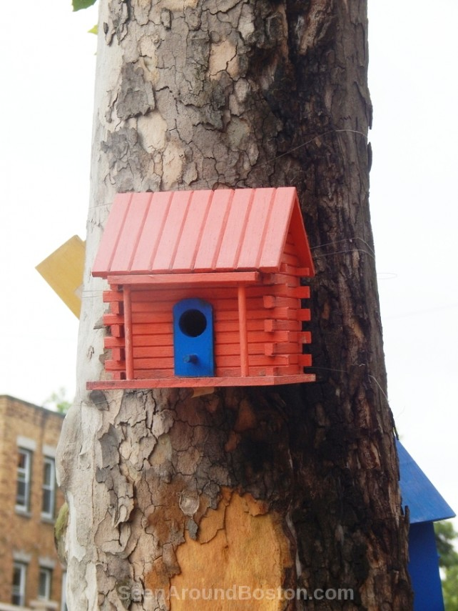 orange bird house, jamaica plain street art
