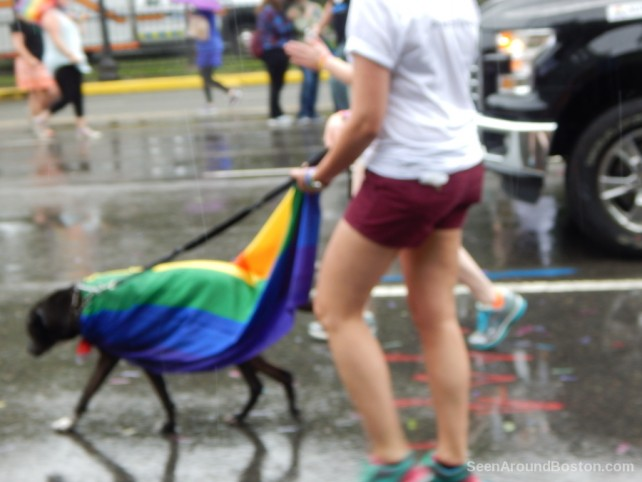 rainbow flag dog at pride parade