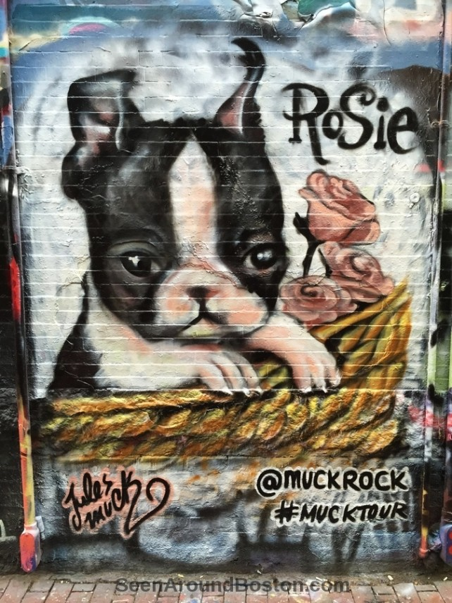 rosie the boston terrier by jules muck, mural in modica way, cambridge