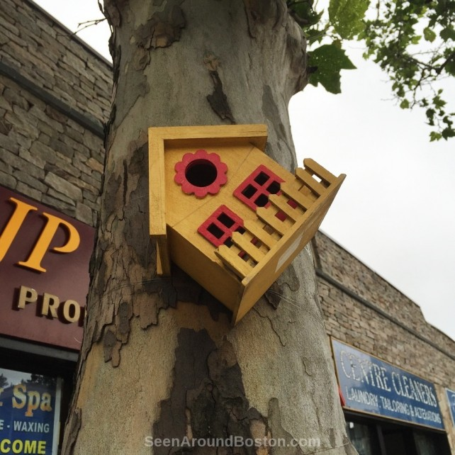yellow bird house, jp nails jamaica plain boston