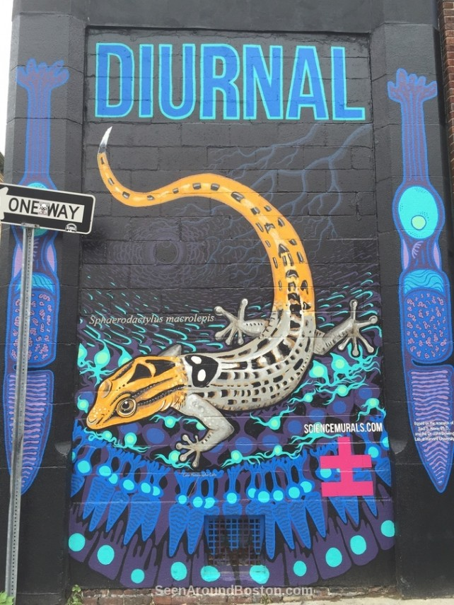 diurnal gecko mural central square cambridge