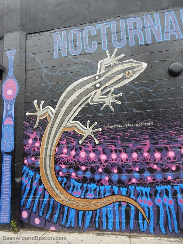 nocturnal gecko, cambridge science murals