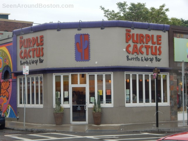 purple cactus burrito and wrap bar, centre street jamaica plain